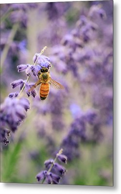 The Honey Bee And The Lavender Metal Print