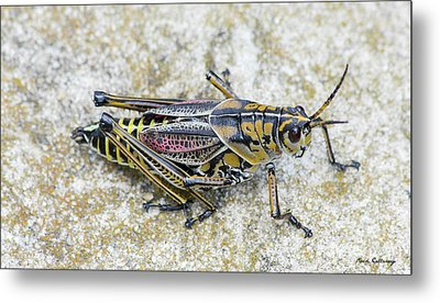 The Hopper Grasshopper Art Metal Print by Reid Callaway