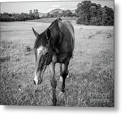 the Horses of Blue Ridge 3 Metal Print