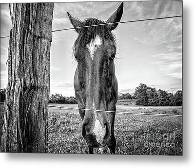 the Horses of Blue Ridge 4 Metal Print