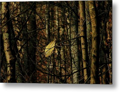 Metal Print featuring the photograph The Last Leaf by Bruce Patrick Smith