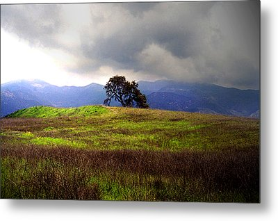 The Last Oak Metal Print by Emanuel Tanjala