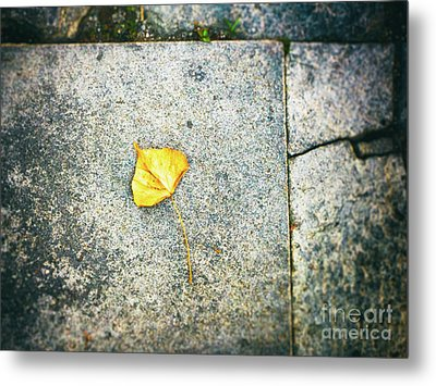Metal Print featuring the photograph The Leaf by Silvia Ganora