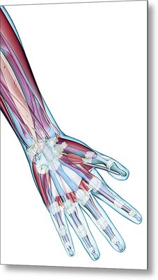 The Ligaments Of The Hand Metal Print by MedicalRF.com