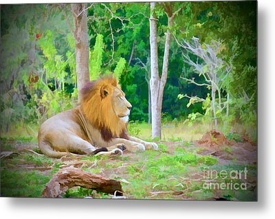 The Lion King Metal Print by Judy Kay