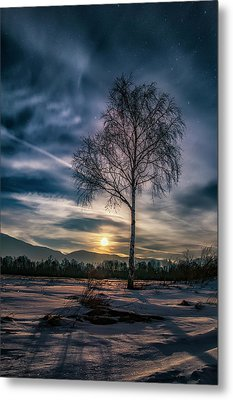 The Lonely Birch Metal Print