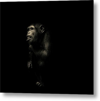 The Look Says It All Metal Print by Martin Newman