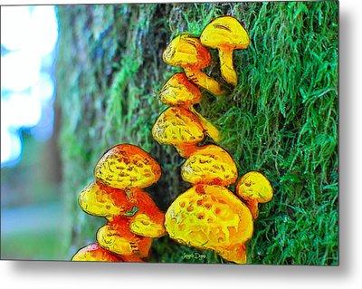 The Mushroom 12 - Mm Metal Print