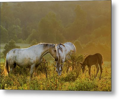 The Next Generation Metal Print by Ron  McGinnis