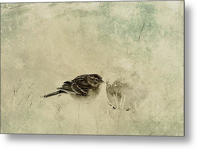 The Orange And Sparrow Metal Print