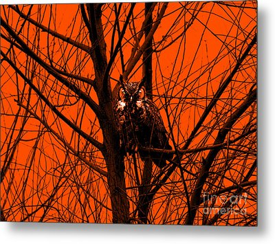 The Owl . Orange Metal Print by Wingsdomain Art and Photography