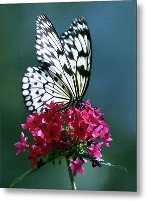 The Painted Butterfly Metal Print
