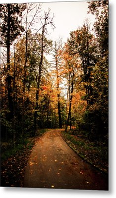 The Path Metal Print by Annette Berglund