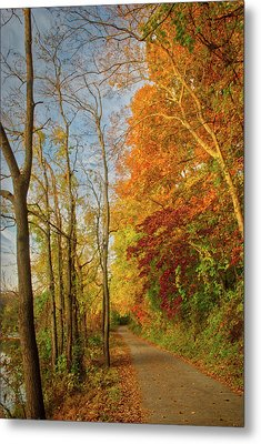 Metal Print featuring the photograph The Path In Fall by Mark Dodd