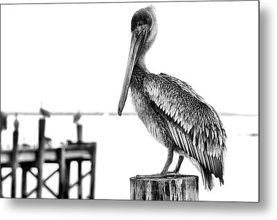 The Pelican In Black And White Metal Print by JC Findley