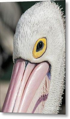 The Pelican Look Metal Print by Werner Padarin