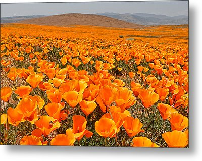 The Poppy Fields - Antelope Valley Metal Print by Peter Tellone