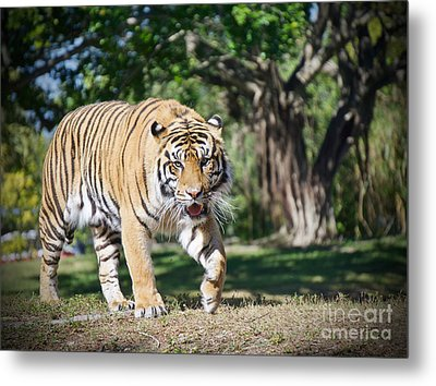 The Prowler Metal Print