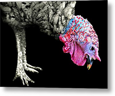 The Red Neck  Metal Print by Diana Angstadt