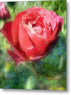 The Red Rose Metal Print by Carol Grimes