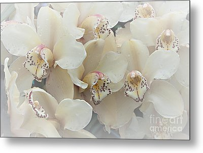 The Secret To Orchids Metal Print by Sherry Hallemeier