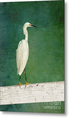 The Small White Heron - Snowy Egret Metal Print