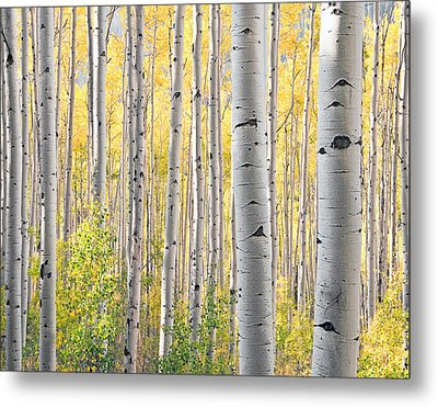 The Softer Side Of Fall Metal Print by The Forests Edge Photography - Diane Sandoval