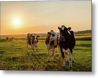 Metal Print featuring the photograph The Sunset Graze by Joel Witmeyer