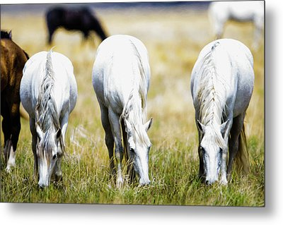 The Three Amigos Grazing Metal Print