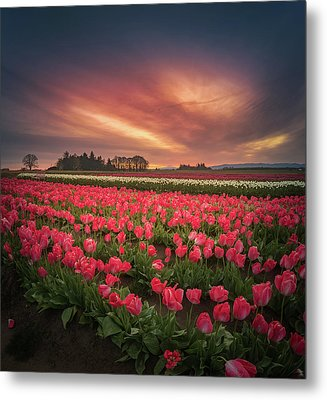 Metal Print featuring the photograph The Tranquil Morning Before Sunrise by William Lee