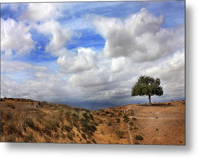 Metal Print featuring the photograph The Tree Of Wisdom by Martina  Rathgens