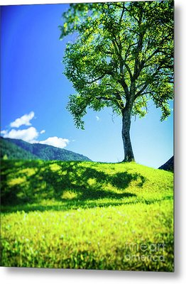 Metal Print featuring the photograph The Tree On The Hill by Silvia Ganora