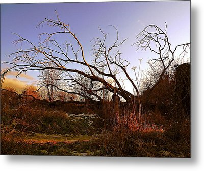The Twilight Tree Metal Print by Sophia Shine