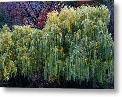 The Willows Of Central Park Metal Print