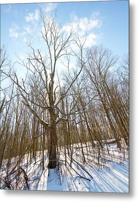 The Winter Woods Metal Print by Tim Fitzwater