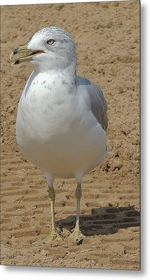 Belmont Beach Bird Metal Print