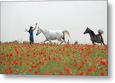 Three At The Poppies' Field Metal Print by Dubi Roman