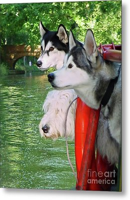 Three Dogs On A Boat Metal Print by Terri Waters