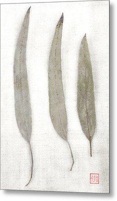 Three Eucalyptus Leaves Metal Print by Carol Leigh