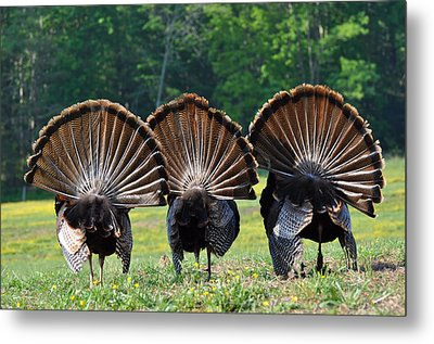 Three Fans Metal Print by Todd Hostetter