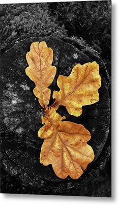 Three Leaves On Black Metal Print