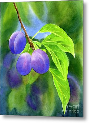 Three Purple Plums With Background Metal Print