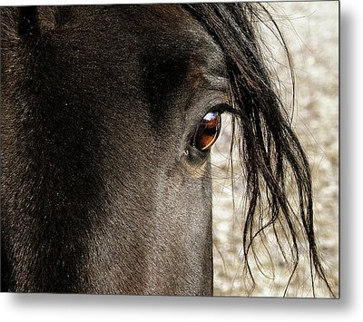 Through The Eye Of A Stallion Metal Print