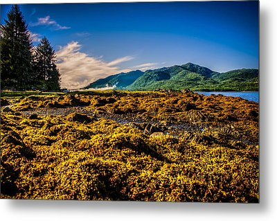 Tide Pool Metal Print by Robin Williams