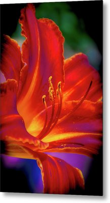Tiger Lily Metal Print by Mark Dunton