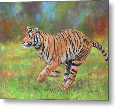 Tiger Running Metal Print by David Stribbling