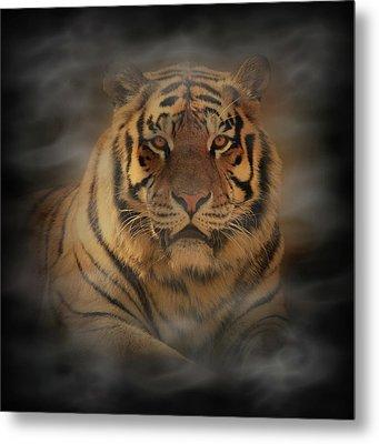 Tiger Metal Print by Sandy Keeton
