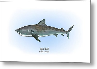 Tiger Shark Metal Print