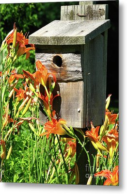 Tigerlily House Metal Print by Deborah Johnson