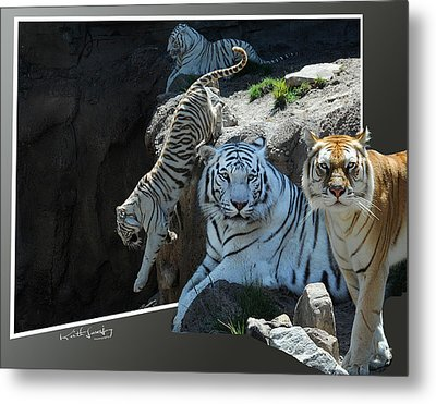 Tigers Out Of Frame Metal Print